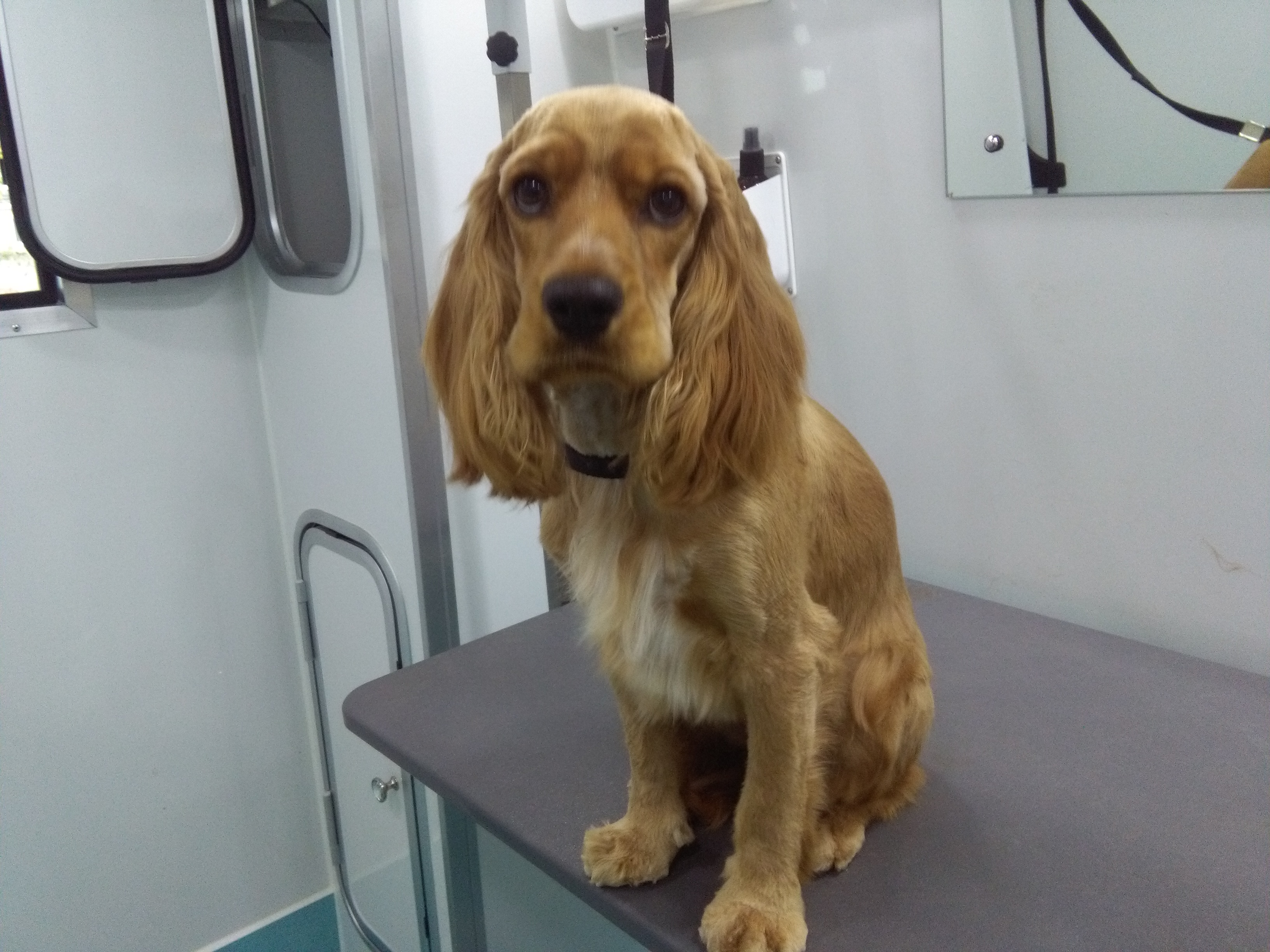 Mobile Dog Grooming Midleton